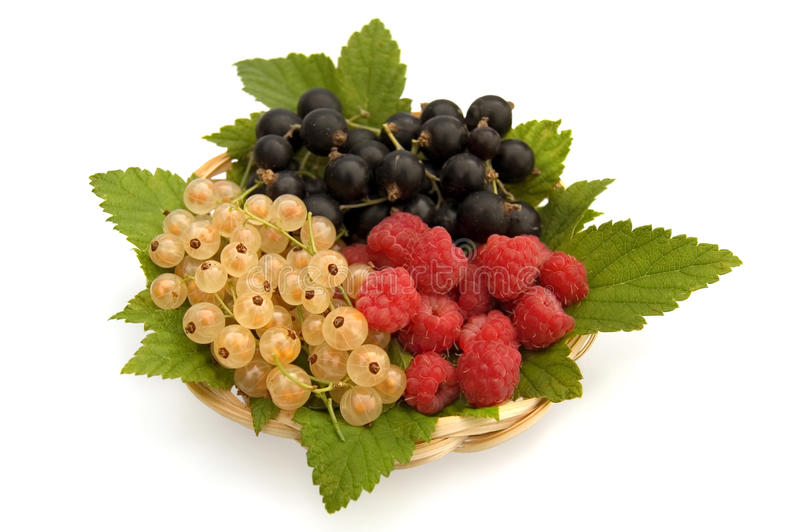 Download Currants and raspberries stock photo. Image of cutout - 15843452