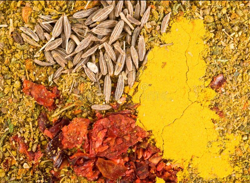 curry kärnar ur zira royaltyfri bild