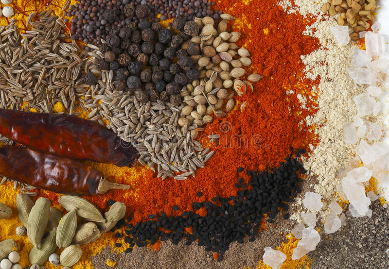 Curry kryddar rektangulärt royaltyfri foto