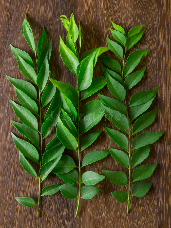 Curry leaves stock image