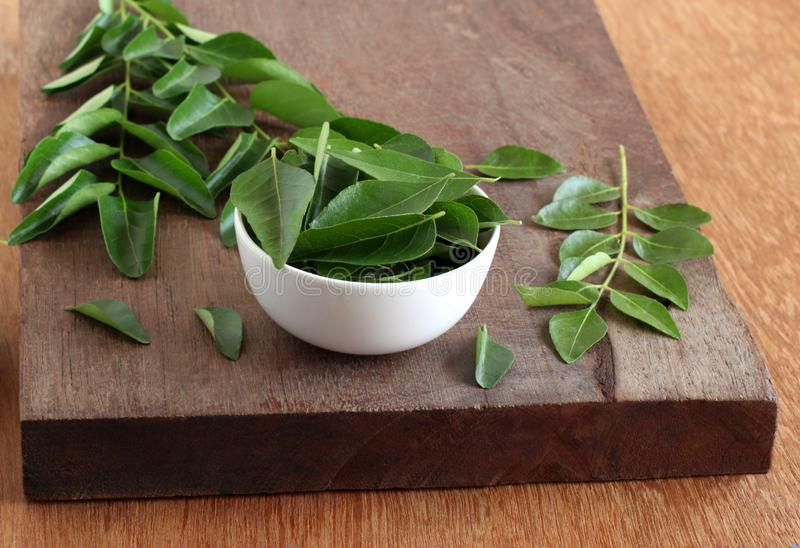 Curry Leaves Indian Food Tempering Ingredient. Curry leaves, which are a healthy ingredient used in tempering for Indian food like sambar, rasam and curries, and stock photos