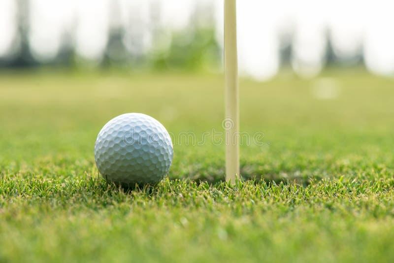 Curse el cachorro de la pelota de golf en el agujero cercano verde para el día de la familia imagen de archivo