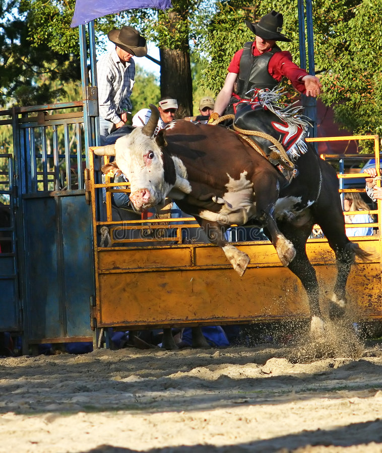 Curseur 1 de Bull photographie stock libre de droits