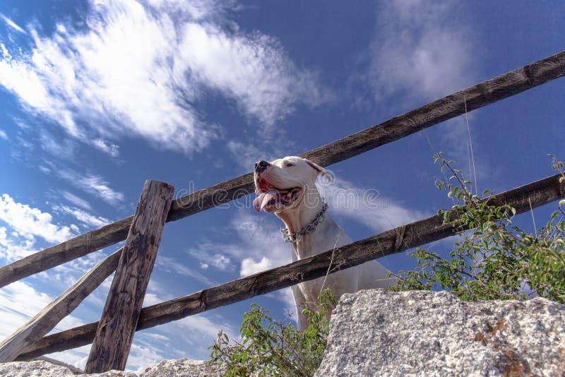 Curso com cães imagem de stock