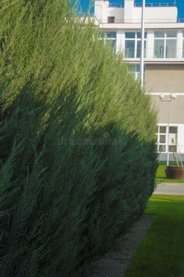 Curso das férias de verão do mar do céu das árvores de cipreste do hotel fotografia de stock royalty free