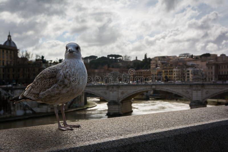 Curso de pedra do Vaticano do rio de Ledge Rome Italy Tiber da ponte da gaivota imagem de stock