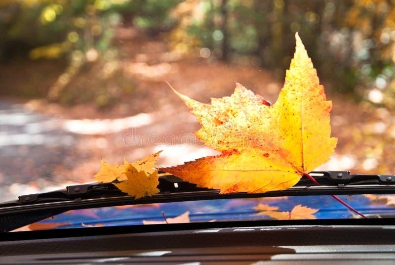 Curso do outono imagens de stock