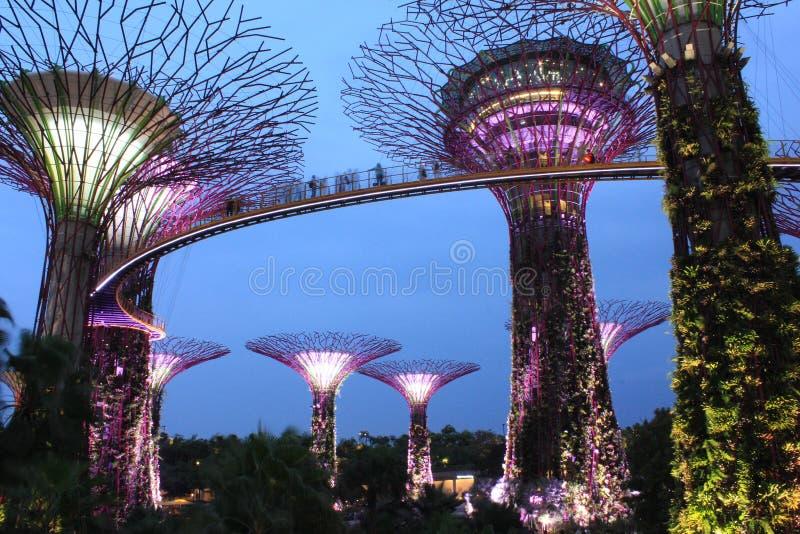 Curso singapore imagem de stock