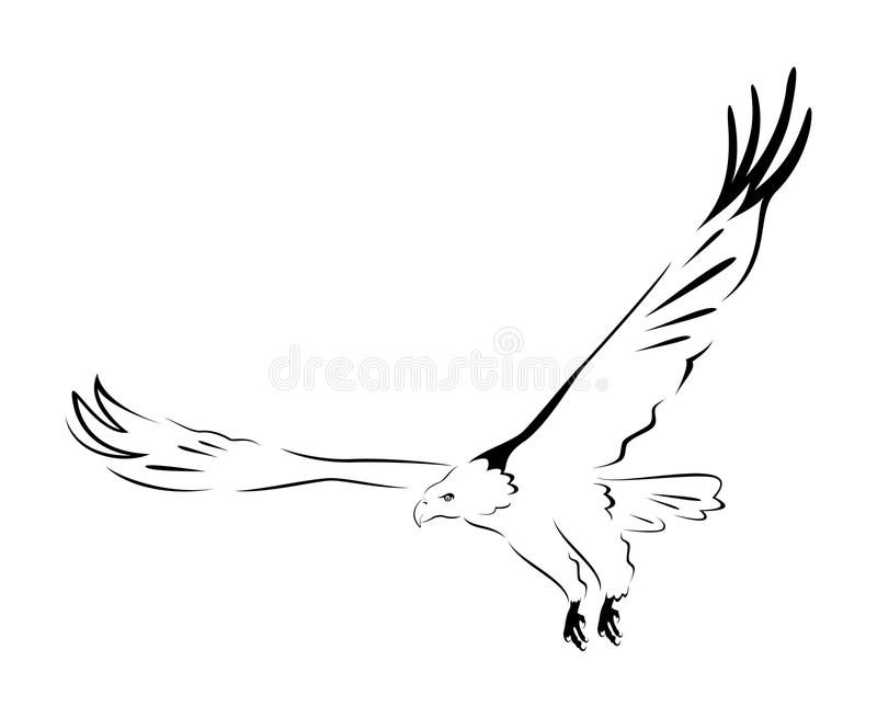 Cursos da águia ilustração royalty free
