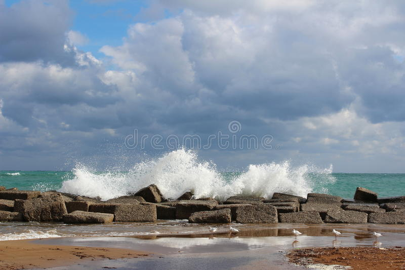 curt morza obrazy stock