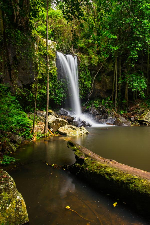 Curtis Falls in Mount Tamborine National Park on the Gold Coast stock photo