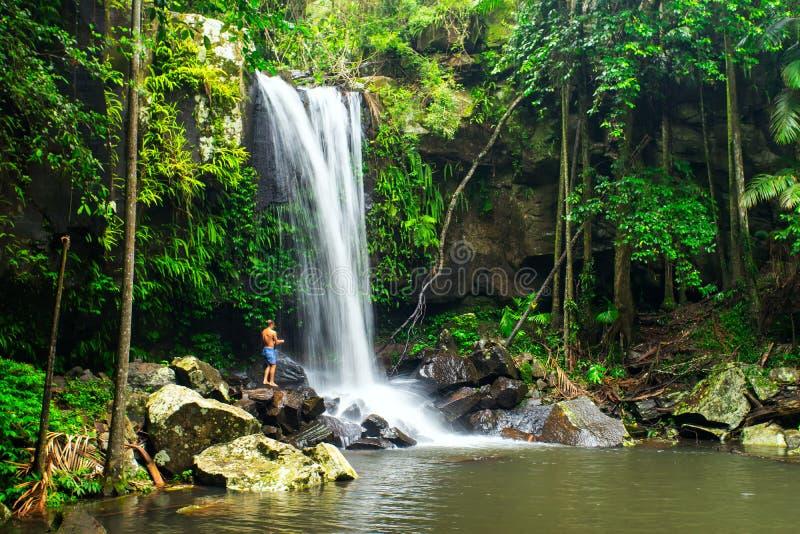 Curtis Falls no parque nacional de Tamborine da montagem no Gold Coast imagem de stock royalty free