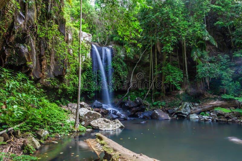 Curtis Falls in Tamborine National Park, stock photos