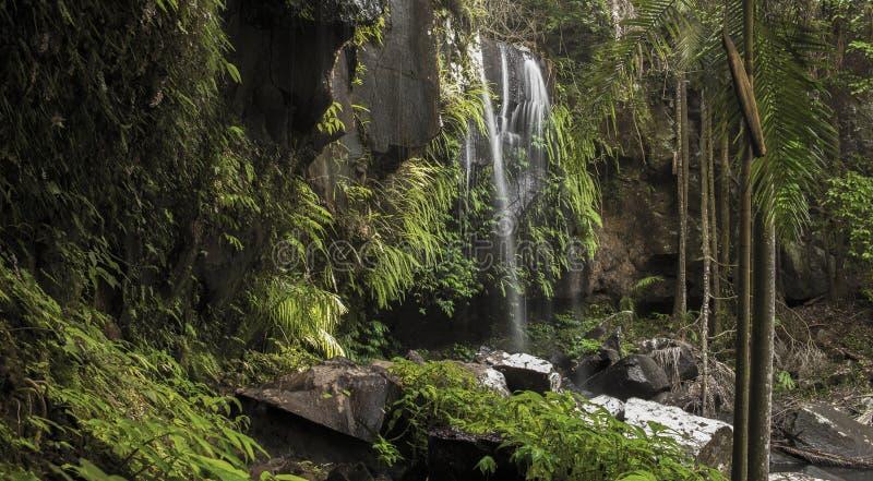 Curtis Falls Waterfall in Mount Tambourine royalty free stock image