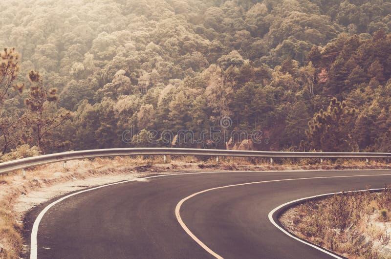 Curva afiada bonita da estrada local na floresta grande foto de stock