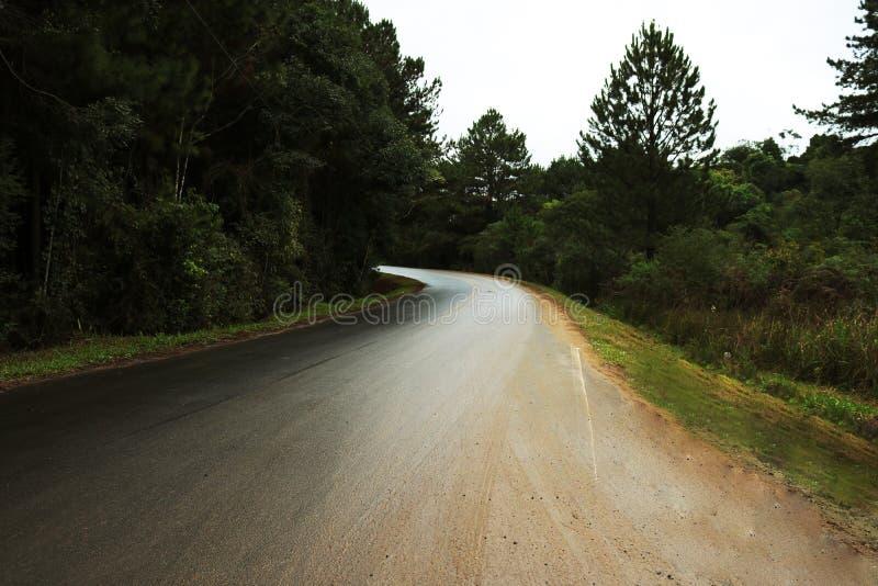 Curva de un camino en el medio de un bosque fotografía de archivo