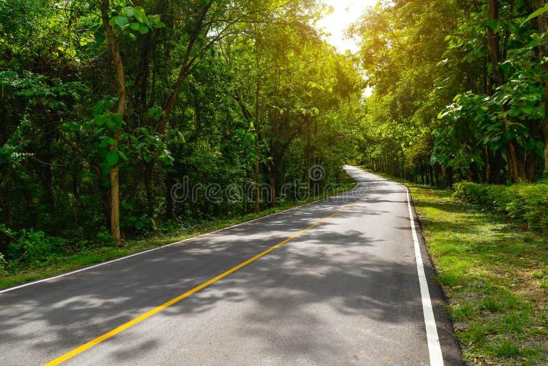 curva del camino para el paso del transporte el árbol forestal verde con luz del sol imagenes de archivo