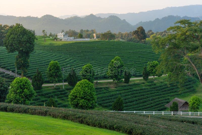 Curva do chá verde no monte na província de Chiang Rai, Tailândia fotos de stock