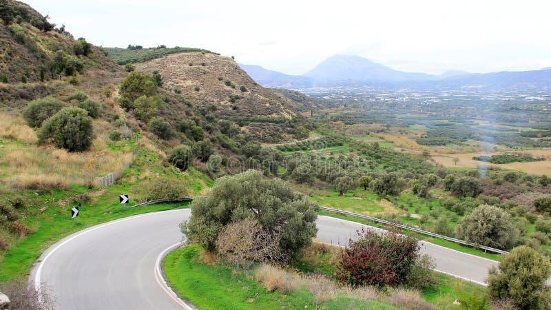 Curva e Olive Plantation With Mountain View La Grecia fotografia stock