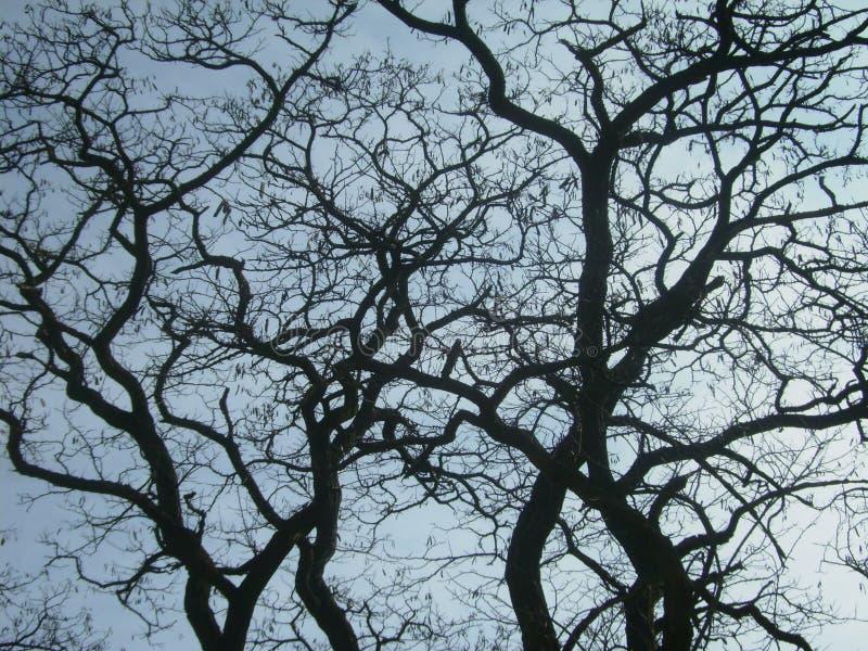 A curva ramifica da árvore na mola no fundo do céu azul fotografia de stock