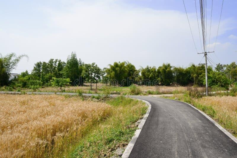 Curvando el blacktop del campo en campos de trigo del verano soleado a popa fotografía de archivo libre de regalías