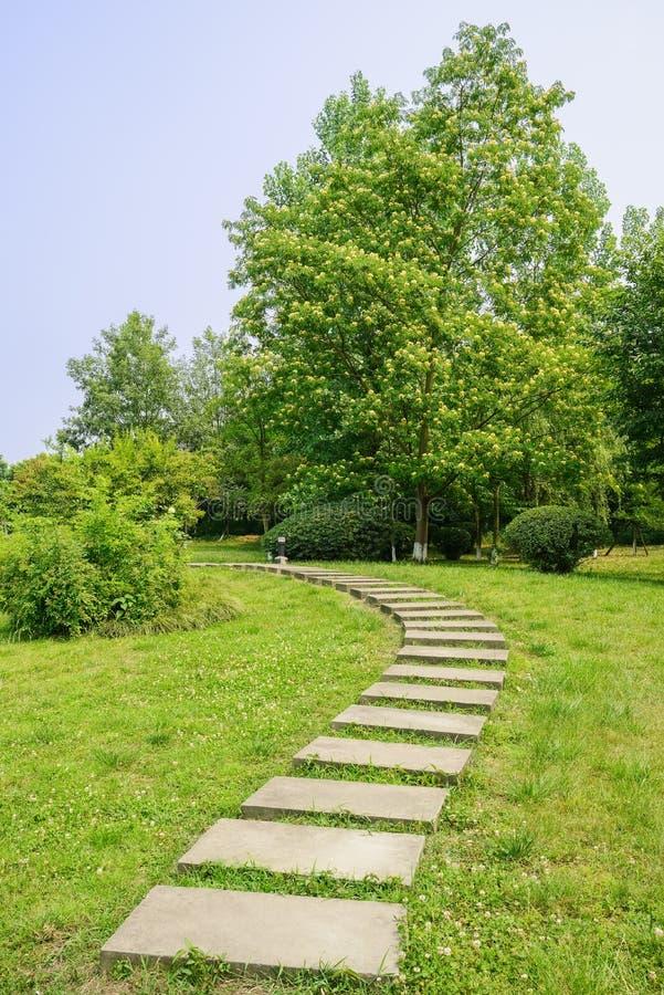 Curvando o trajeto da laje no gramado do verão ensolarado imagens de stock