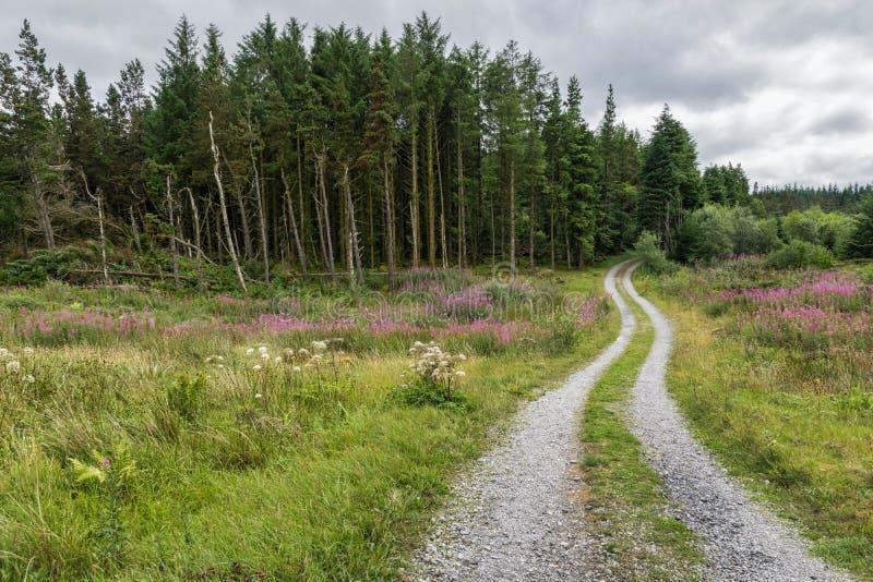 Curvar el camino de tierra en el bosque -2 fotografía de archivo