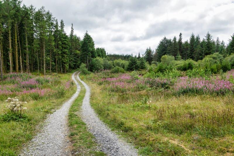 Curvar el camino de tierra en el bosque -4 foto de archivo libre de regalías
