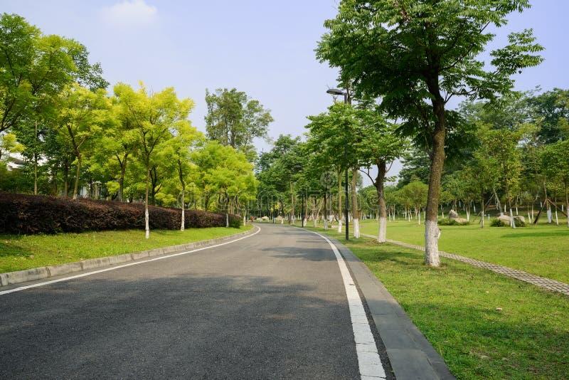 Curvar el camino del blacktop en verano soleado imagen de archivo
