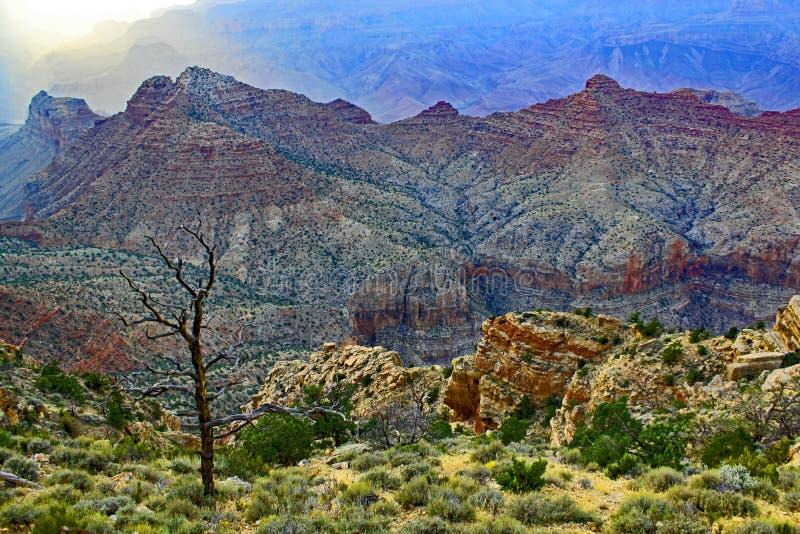Curvas da vida - beleza terrestre imagens de stock royalty free