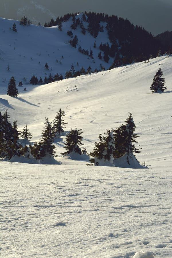 Curvas dos esquis na neve no por do sol fotografia de stock