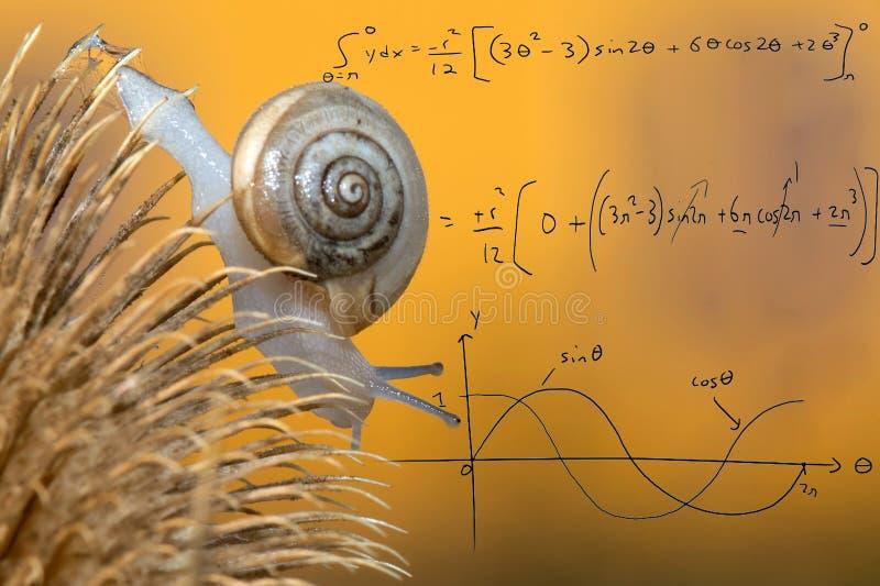 Curvas matemáticas no caracol no fundo amarelo fotos de stock