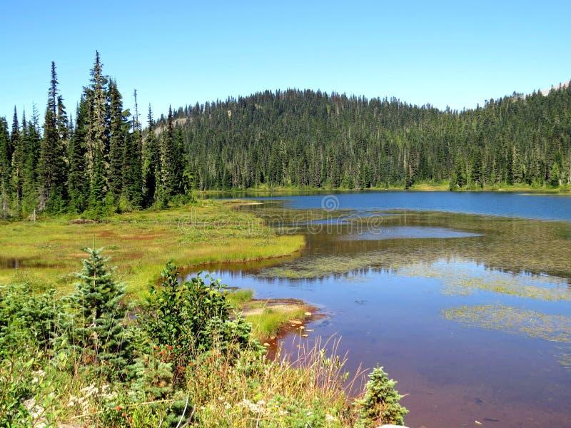 Curvas verdes de fluxo na montagem Rainier National Park fotografia de stock