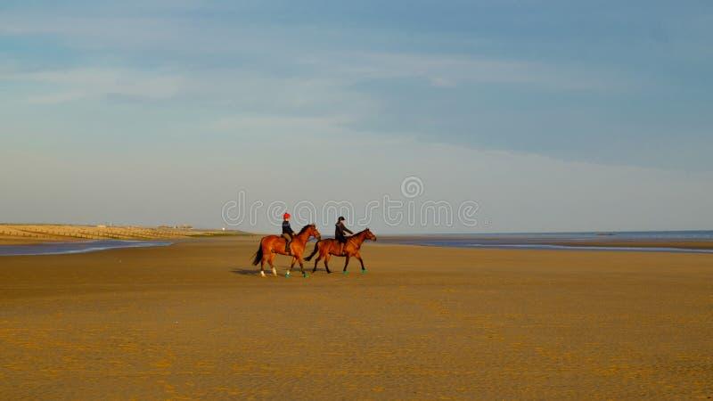 A curvatura lixa Praia-cavalos fotografia de stock royalty free