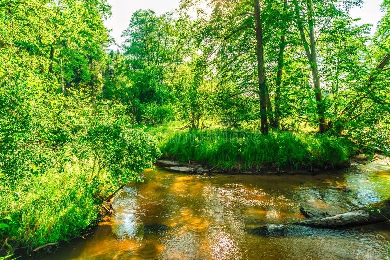 Curvatura pittoresca del fiume con luce solare fotografia stock