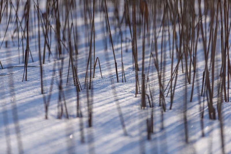 curvaturas velhas da grama seca no inverno foto de stock