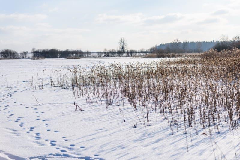 curvaturas velhas da grama seca no inverno fotos de stock