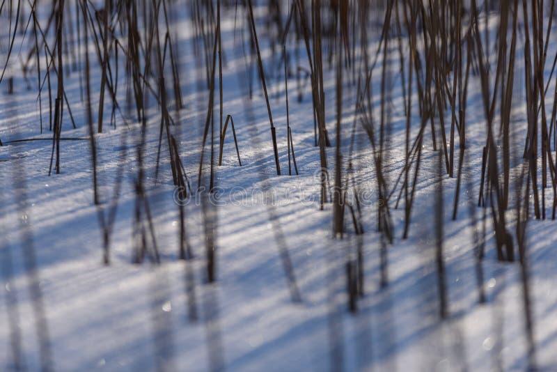 curvaturas velhas da grama seca no inverno fotografia de stock