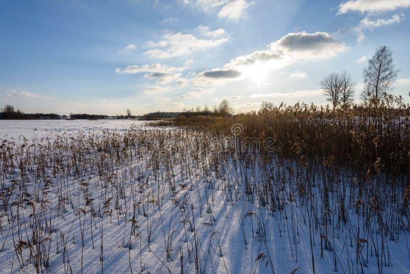 curvaturas velhas da grama seca no inverno imagens de stock royalty free