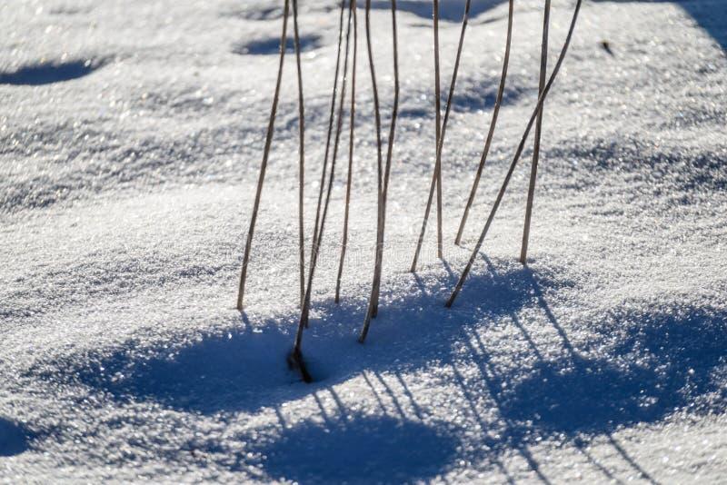 curvaturas velhas da grama seca no inverno imagens de stock