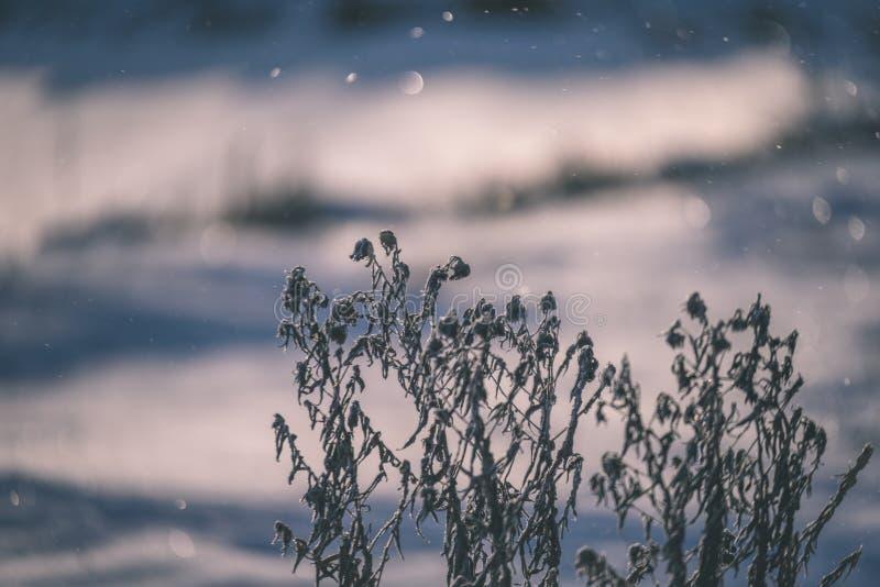 curvaturas velhas da grama seca no inverno - olhar do vintage retro imagem de stock