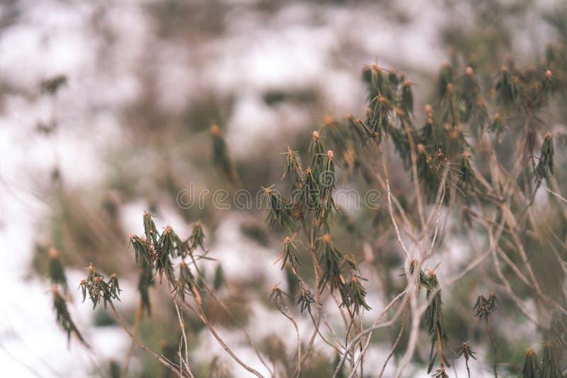 curvaturas velhas da grama seca no inverno - olhar do vintage retro fotos de stock