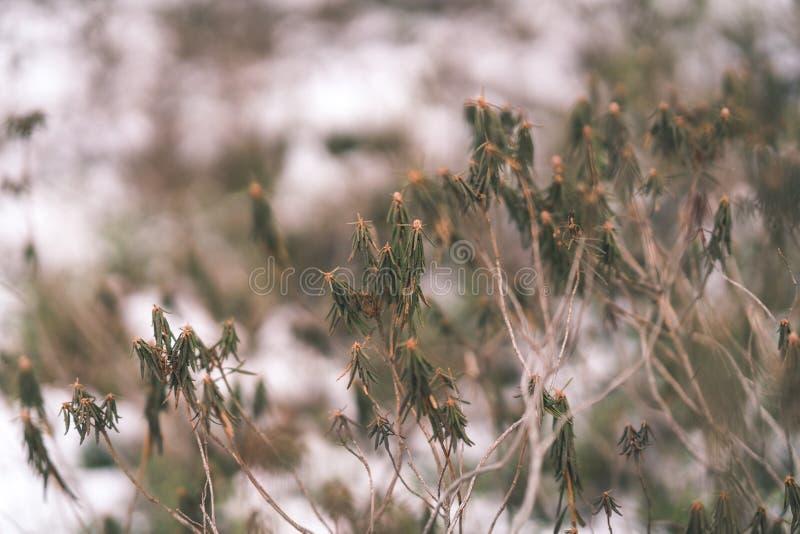 curvaturas velhas da grama seca no inverno - olhar do vintage retro imagem de stock royalty free