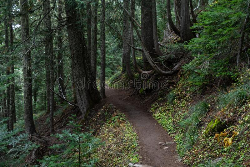 Curvature della traccia attraverso la foresta di nord-ovest pacifica fotografia stock libera da diritti