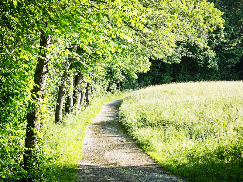 Download Curve stock photo. Image of obsolete, gray, grass, footpath - 29136222