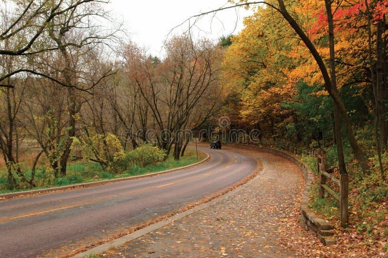 Curve in Autumn Woods