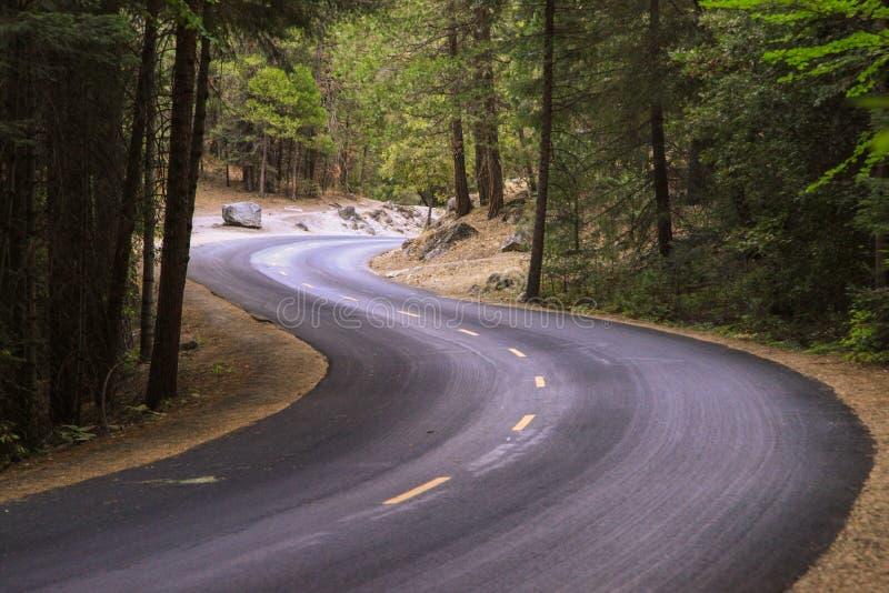 Curve el camino en bosque en el parque nacional de Yosemite en los E.E.U.U. fotos de archivo