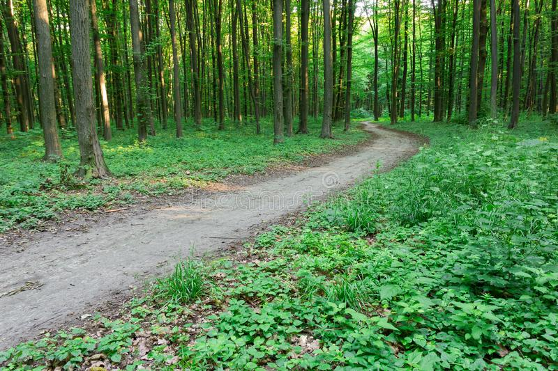 Curve footpath through green forest stock photos