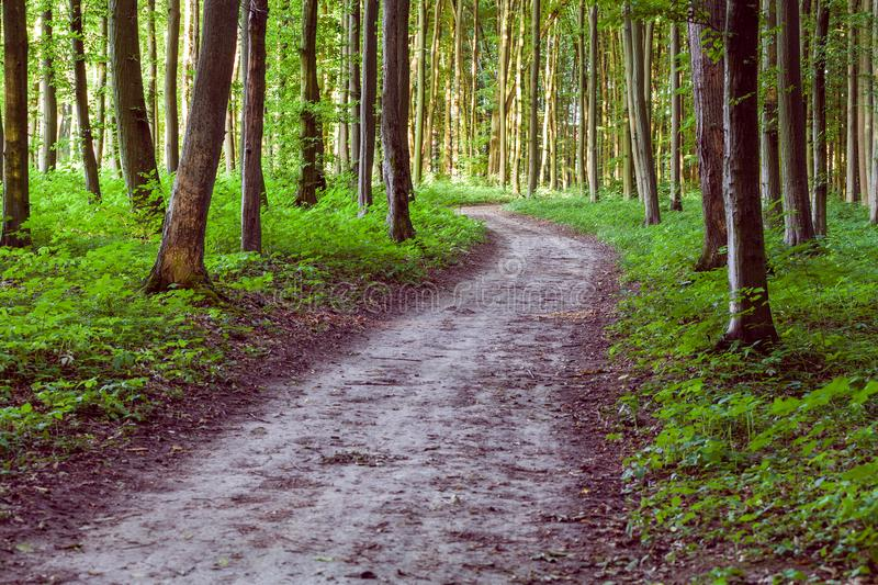 Curve footpath through green forest royalty free stock photography
