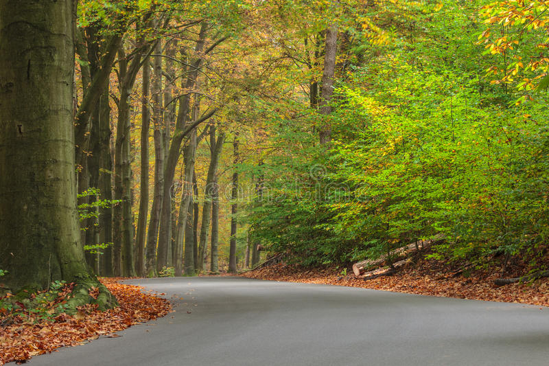 Curved autumn road in Dutch national park Veluwe royalty free stock image